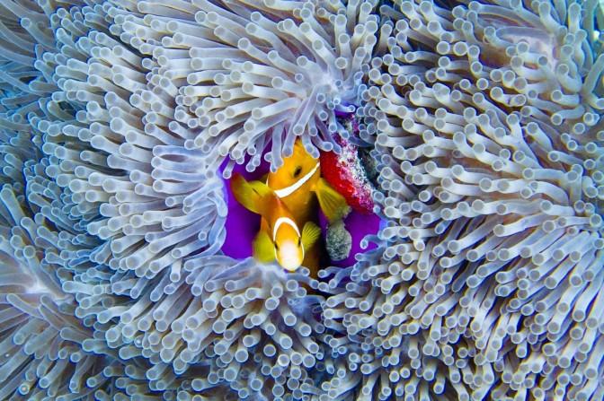 Vilamendhoo Snorkeling – Sep 2011